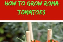 Growning Roma