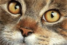 Realistic Cat Art / Realistic domestic cat and kitten art