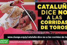 Identitat Catalana