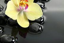 orhideak
