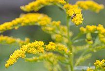 Herbalism & Natural Health