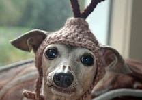 Just for Fun! / Pets brighten our days.  Silly faces, fun antics, joyful moments, tolerated dress ups.  Enjoy.