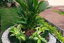 Plantas y jardín