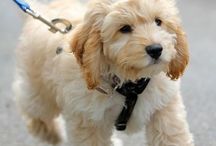 Puppy and Dog Tips / Tips for dogs and puppies