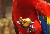 Aves de México | Birds of Mexico / by Xcaret Park