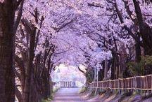 Landscape(Japan)