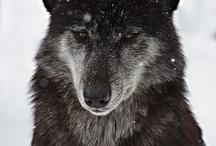 Wild Animals / by Kimberly Snider King