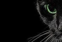 #Black / Black and beautiful