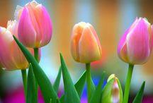 Csodás  természet! / Ember . természet virágok  ember . és állat  a világon minden!