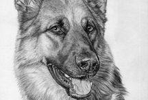 Hermosas Ilustraciones de distintos Animales