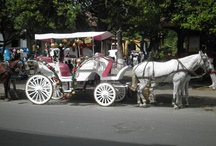 Horse Carriage in Granada / We keep the tradition of colonial cities. Take a ride in a horse carriage.
