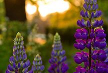 Garden Ideas / by Monica Niwa-Greene