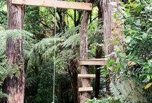 Backyard Rainforest