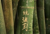 Bamboo Trees / by Sario