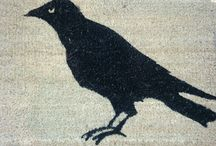 We love crows and ravens