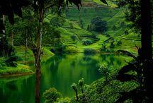 Sri Lanka / Sri Lanka
