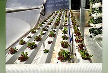 Featured Products / Highlighted products of interest to greenhouse enthusiasts and gardeners.