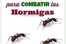 Hormigas e insectos