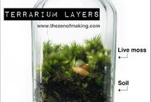 Plants n stuff / by Azriel Hanson-Collura