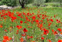 Flora of Lefkada / Lefkada, the 'white island' by its name, is in fact very green