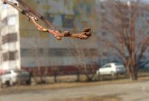 #Весна/Перемены