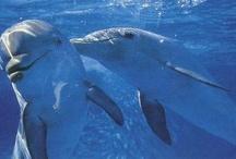 love Dolphin