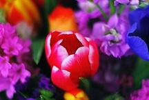 Flowers - Landscapes