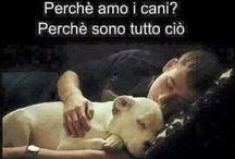 Frasi Cani