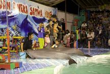 Save Dolphin
