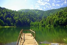 Dağ Orman Resimleri