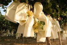 C.R.D.O.P. Uva de Mesa Embolsada del Vinalopó / La Uva de Mesa Embolsada del Vinalopó es una fruta única en el mundo por su particular proceso de maduración.