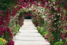 Garden/ Tuin/ Jardin