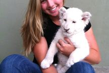 Volunteer and work with Lion Cubs / Come to Africa and Volunteer to work with Lion Cubs in Africa. www.mabulani.co.za