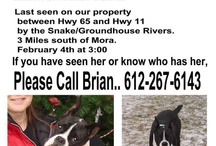 Lost & Found Pets / by All God's Creatures Pet Services