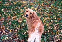 Kæledyr | Pets / Når man er kæledyrsejer, så er der mange ting, der er gode at vide. Og det gælder både, hvis du er den heldige ejer af en sød lille kanin, en hund eller en kat.  Her på siden kan du blandt andet finde gode råd til de vigtigste ting, du skal have styr på som kæledyrsejer samt sjove facts om dit kæledyr.