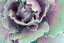 Botanical Kale