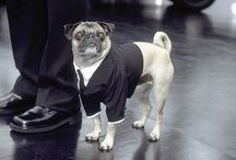 Mascotas de película