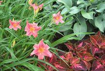 квітник-рослини,поради,ідеї т.щ.