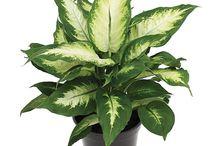 Plantas para ambientes internos