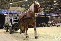 Equita'Lyon - Les chevaux de trait / Photos des présentations des chevaux de trait lors du Salon Equita'Lyon.