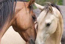 Horses & Cowboys