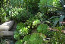Garden - Succulents