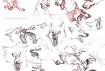 Drawing reference; animals
