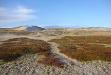 Skodbjerge / Skodbjerge ist eine sehr hügelige Dünenlandschaft an der dänischen Nordsee mit hygge Ferienhäusern - auch von DanWest.
