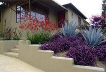 colour in garden