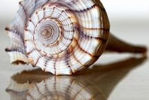 shells & fossils