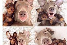 Śmieszne zdjęcia zwierząt