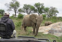 South Africa / Cape Town, the Winelands and Safaris