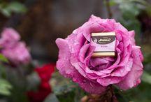 Chocolate and Flowers - Fiori e Cioccolato / Spring and Summer in Streglio chocolate - Primavera ed estate nel cioccolato Streglio