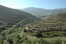 WAW Vineyards